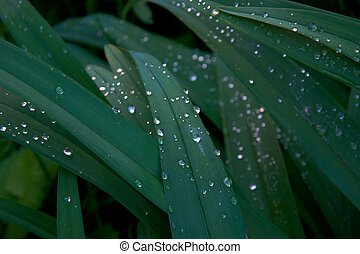 Fresh green grass with water drops 2