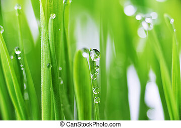 green grass - fresh green grass with water drops close up