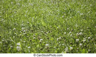 Fresh green grass with wind flowing