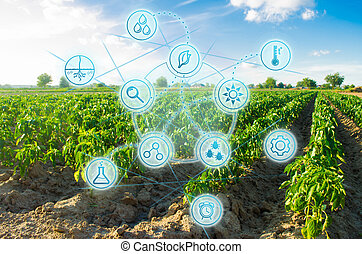 Fresh green greens. Innovations and developments in agriculture. Scientific work and selection, crop forecasting and condition analysis. Modern farming. field of vegetables on a sunny day.