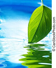 Fresh green leaf and clear blue water reflected in water