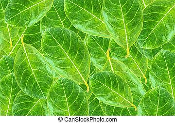 Fresh green leaf background