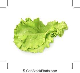 Fresh green leaf lettuce, isolated on white background