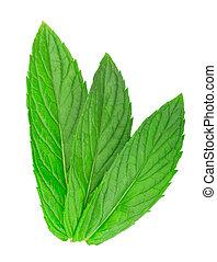 melissa - fresh green leaf of melissa isolated on white ...