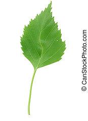 fresh green leaf on