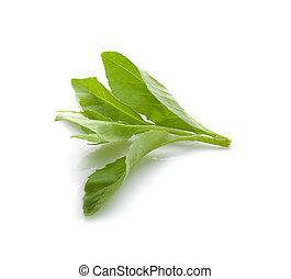 Fresh green leaf on white background.