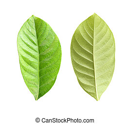 Fresh green leaf set.