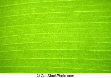 Fresh green leaf.