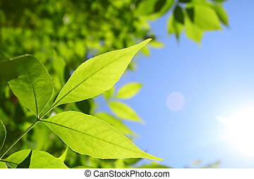 fresh green leaves and natural sun rays