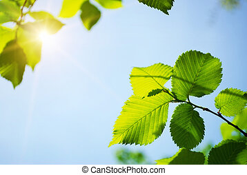 fresh green leaves and sunlight
