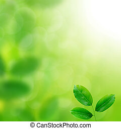 Fresh Green leaves background