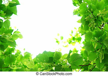 Fresh green leaves close up natural frame - Fresh green ...
