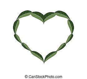 Fresh Green Leaves in A Beautiful Heart