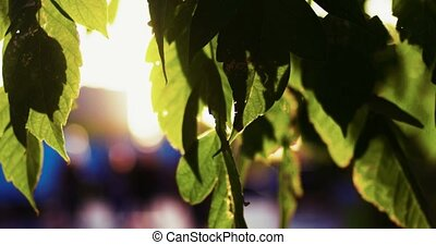 Fresh green leaves in focus in front of walking pedestrians on blurred background