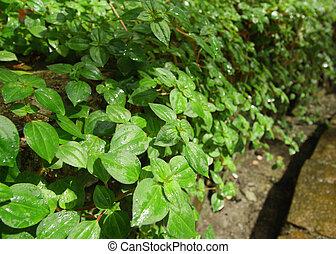 Fresh green leaves in sunlight background