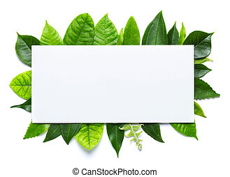 Fresh green leaves isolated on white background with blank place for text