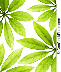 Fresh green leaves isolated on white background