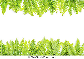 Fresh green leaves on white background with copy space.