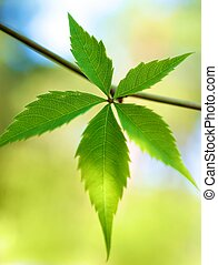 Fresh green leaves over abstract background