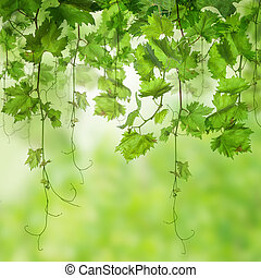 Fresh Green leaves with sunlight background