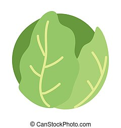 fresh green lettuce icon on white background