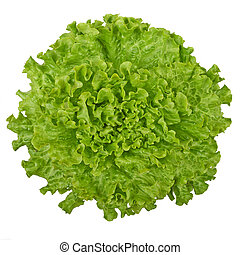 Fresh green lettuce isolated