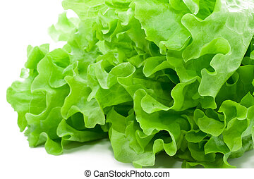 Lettuce - Fresh green Lettuce salad on white background