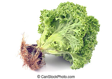 Fresh green lettuce with root