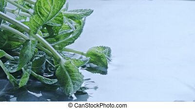 Fresh green mint floats on water. Slow motion 2k video shooted on 240 fps