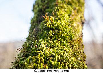 fresh green moss on a tree trunk