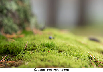 Fresh green moss, shallow depth of field