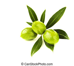 Fresh green olives branch