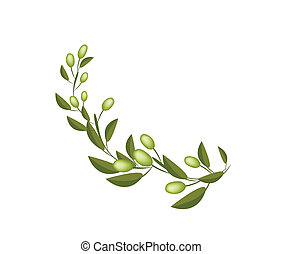 Fresh Green Olives on A Branch on White Background