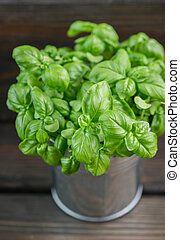 Fresh green organic Basil leaves on dark wooden table