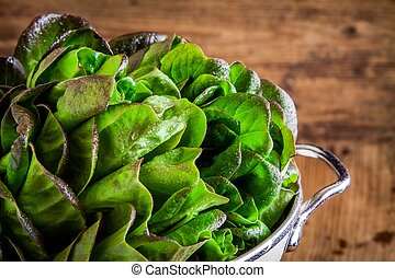 fresh green organic lettuce in a colander closeup