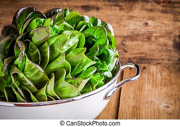 fresh green organic lettuce in a colander