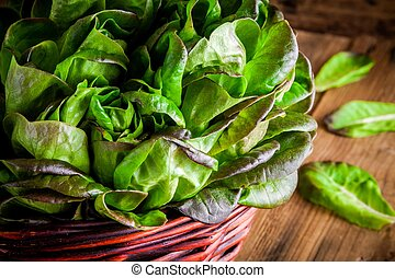 fresh green organic lettuce in the basket on a wooden background