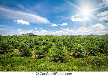 Fresh green palm oil farm plantation. Agriculture