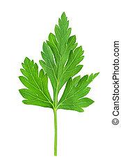 Fresh green parsley leaf isolated