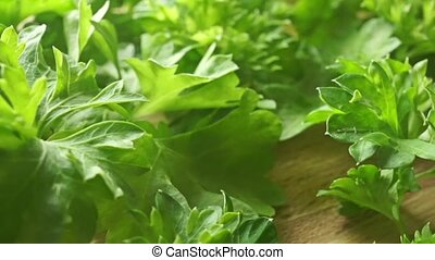Fresh green parsley leaves close up dolly shot clip