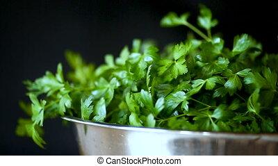 fresh green parsley on a black background - fresh green...