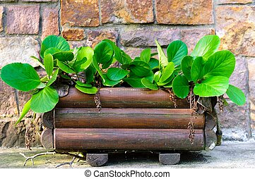 Fresh green plant in wooden pot ready to grow