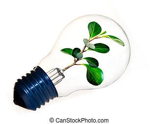 Fresh Green Plant Inside A Light Bu
