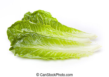 Fresh green romaine lettuce against a white background