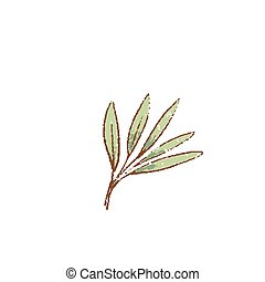 Fresh green Sage leves isolated icon. Spring Rareripes. ...