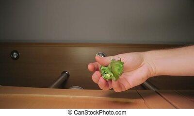 Fresh green salad leaf dropped on food - Fresh green salad ...