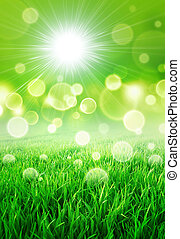 Fresh green sensation - Abstract background of a grass field...