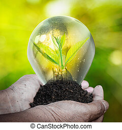Fresh green small plant in light bulb