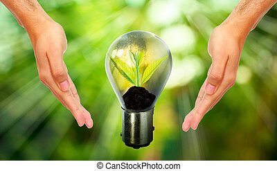 Fresh green small plant in light bulb with blurred green