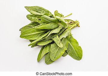 Fresh green sorrel isolated on white background